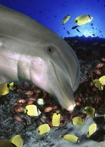 Obrázok Delfíní úsměv 3D pohlednice