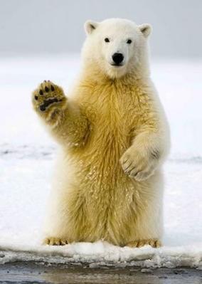 Obrázok Medvědí pozdrav 3D pohlednice