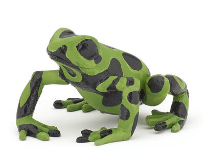 Obrázok Žába zelená
