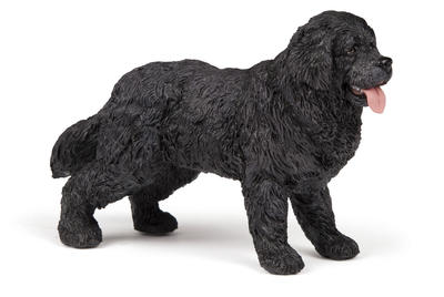 Obrázok Nowofundladský Terrier
