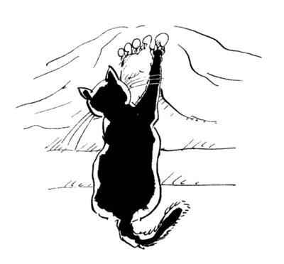 Obrázok Kočičiny