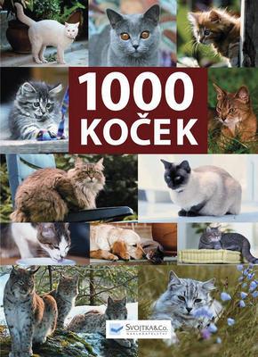 1000 koček