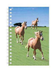 Obrázok Deníček Úžaska Koně
