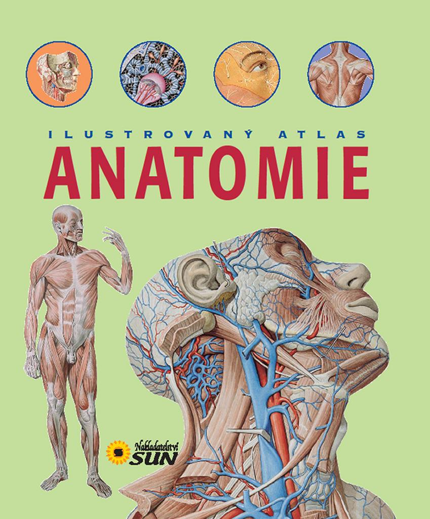 Nett Anatomie Und Physiologie Für Anfänger Fotos - Menschliche ...