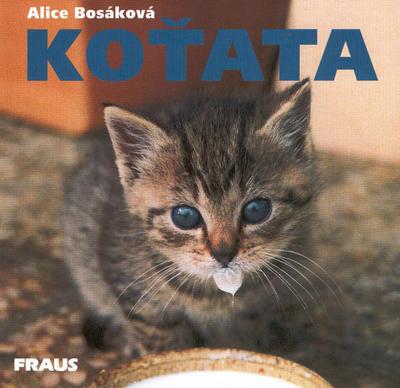 Obrázok Koťata