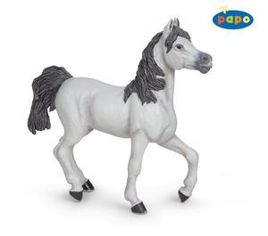 Obrázok Kůň arabský bílý