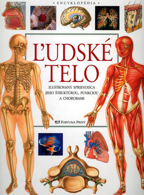 Obrázok Ľudské telo