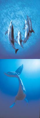 Obrázok Magnetická záložka 969 Delfíni 3.
