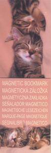 Obrázok MZ 2942 Koťata 2