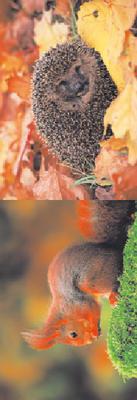 Obrázok MZ 887 Veverka a ježek