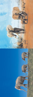Obrázok MZ 898 Sloni