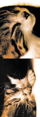 Obrázok MZ 941 Koťata 1.