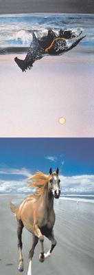 Obrázok MZ 953 Koně 3.