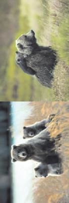 Obrázok MZ 960 Medvědi