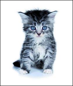 Obrázok Památníček koťátko