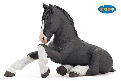 Obrázok Shirský kůň černý hříbě