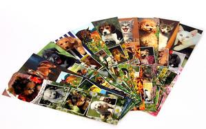 Obrázok Záložka do knihy papírová - foto zvířátek