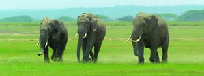 Obrázok Záložka Úžaska Dusající sloni