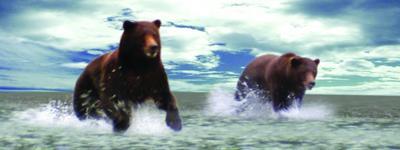 Obrázok Záložka Úžaska Grizly