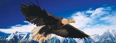 Obrázok Záložka Úžaska Plachtící orel