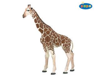 Obrázok Žirafa