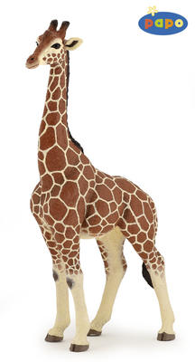 Obrázok Žirafa samec