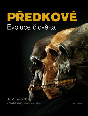 Obrázok Předkové Evoluce člověka