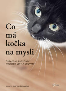 Obrázok Co má kočka na mysli