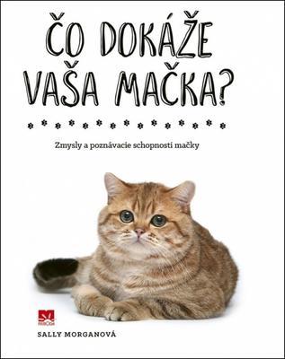 Obrázok Čo dokáže vaša mačka?