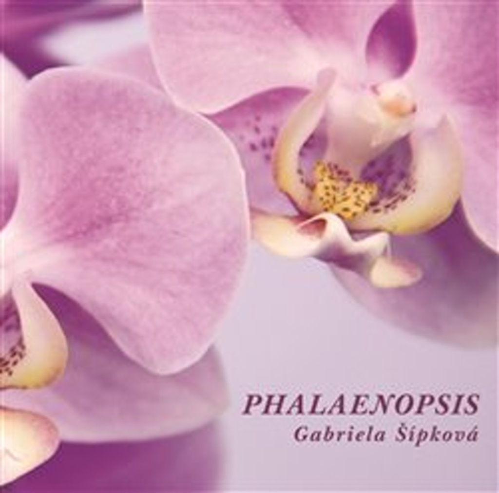 Phalaenopsis - Gabriela Šípková