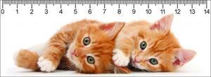 Obrázok 3D pravítko Two Ginger Kittens Deep