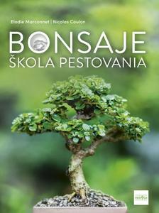 Obrázok Bonsaje škola pestovania